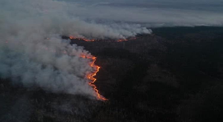В Житомирской и Киевской областях локализованы все очаги лесных пожаров - ГосЧС
