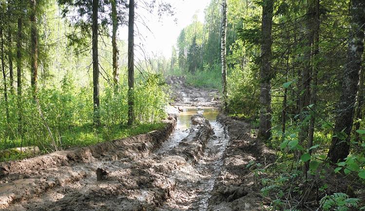 Программу «Большое строительство» расширят до развития лесных дорог