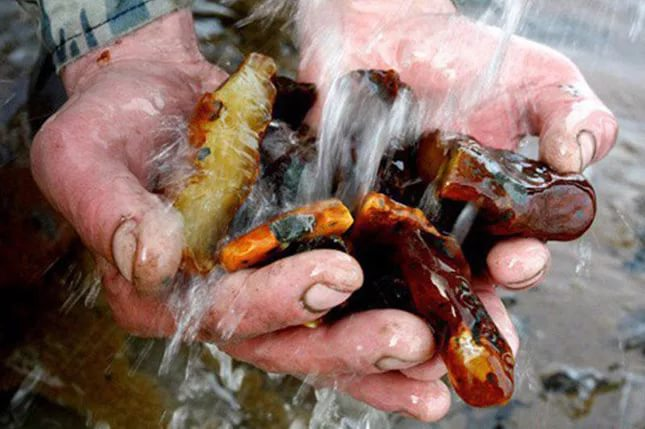 Нардепы блокируют легализацию рынка янтаря