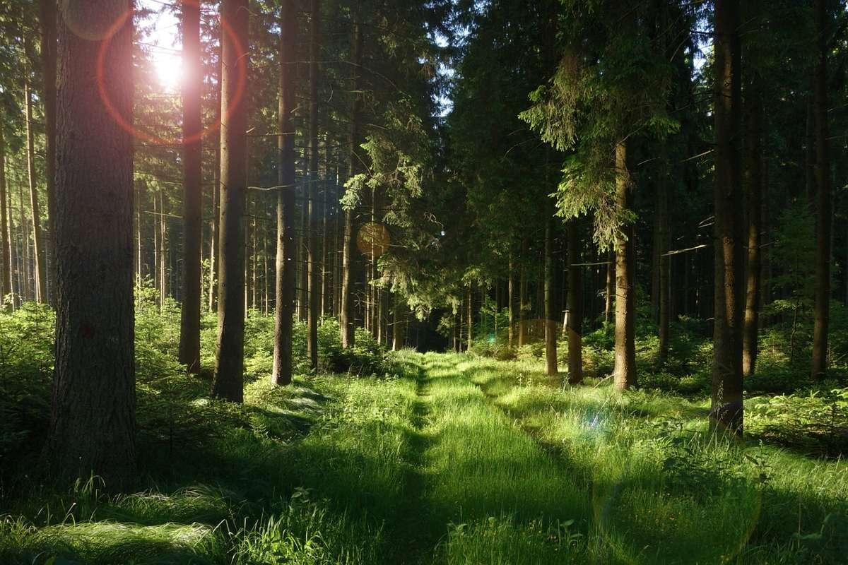 Предприятия Гослесагенства высадили в этом году 25,5 тыс. га. леса