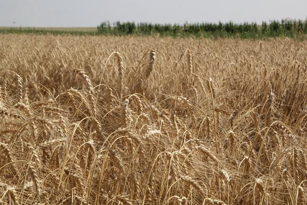 Мораторий на продажу сельхозземель исчезнет через полгода, - эксперты