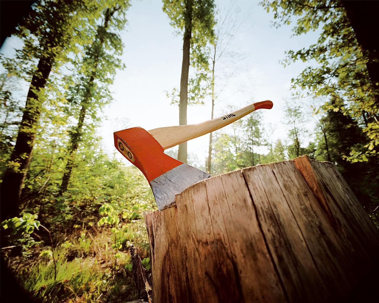 Из-за украинских деревообработчиков не создают новые заповедники
